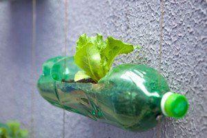 Un orto in bottiglia, idee per riciclare la plastica - Yahoo Meteo Italia