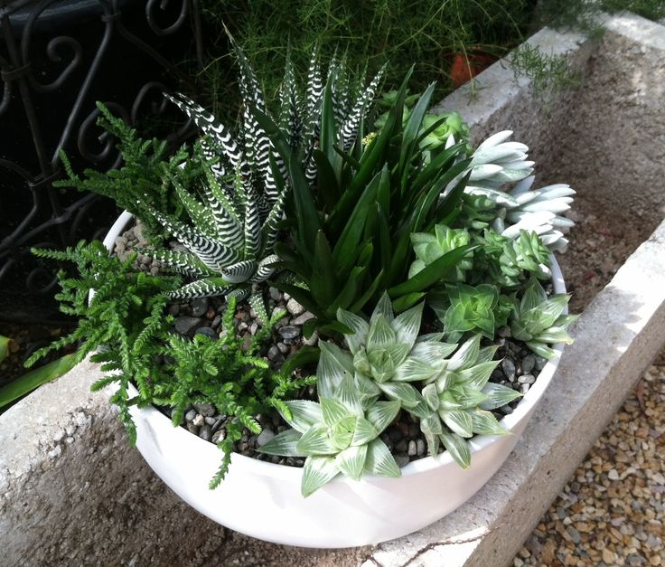 Succulent bowl appropriate for indoor or outdoor