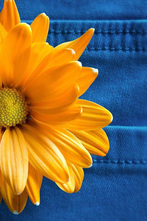 Comtesse du chocolat blue orange pinterest happy - Blue and yellow paint schemes ...