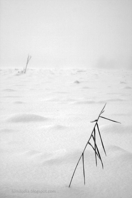 Snow fields - Lumiloska.blogspot.fi (my snow photography blog)