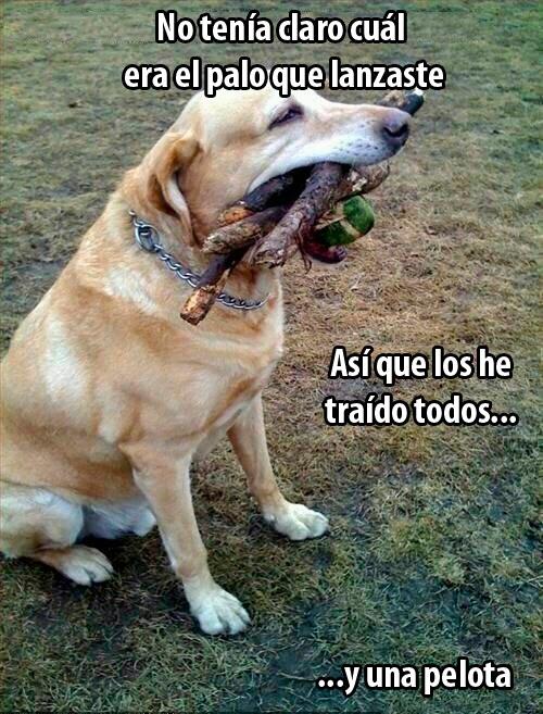 Perros…