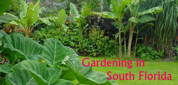 17 best images about gardening zone 10a so florida on for Landscaping without plants