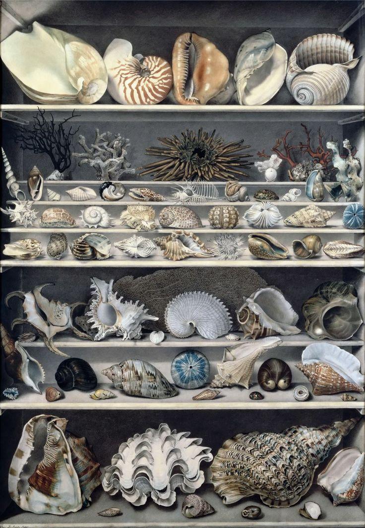 Vicomte De Barde Leroy - Selection of shells
