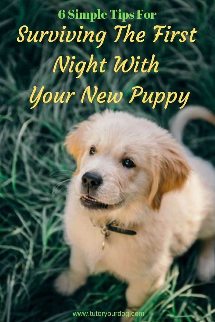 6 Simple Tips For Surviving The First Night With Your New Puppy Tutor Your Dog Puppies New Puppy First Night With Puppy