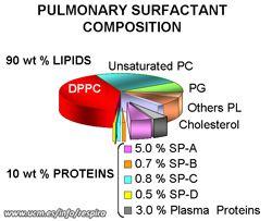 https://www.google.es/search?q=surfactant lung
