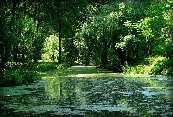 Воронеж пруд в парке Динамо