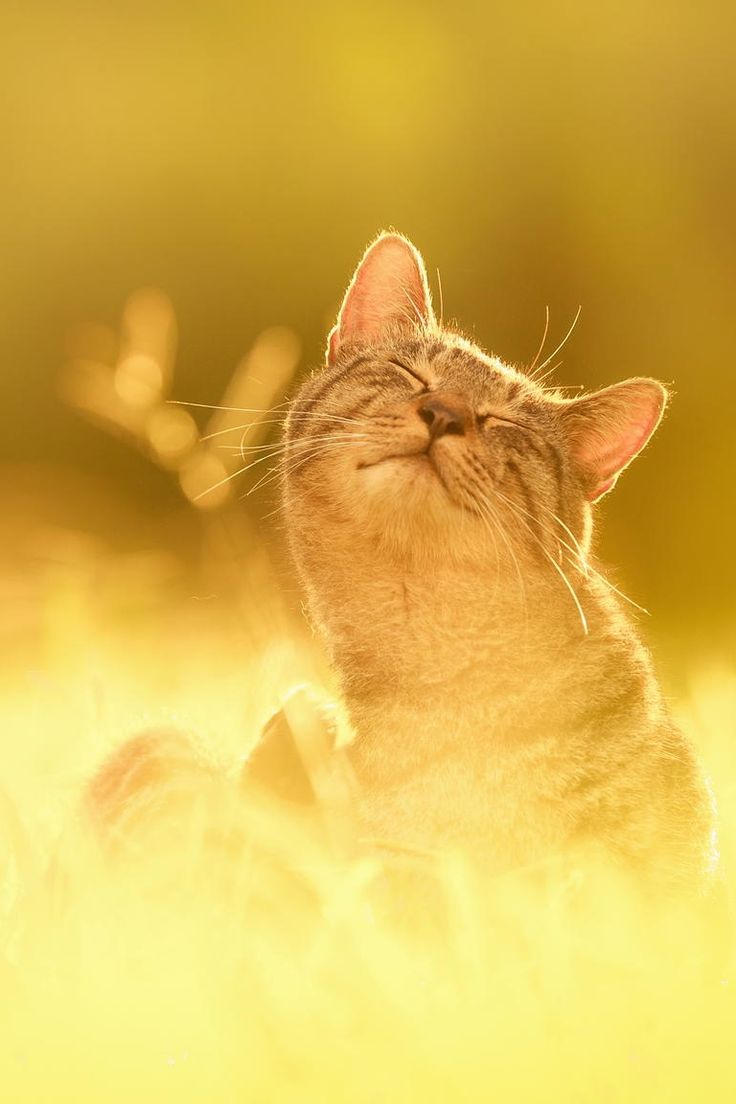 best yellow cat images on pinterest cute kittens kitty cats