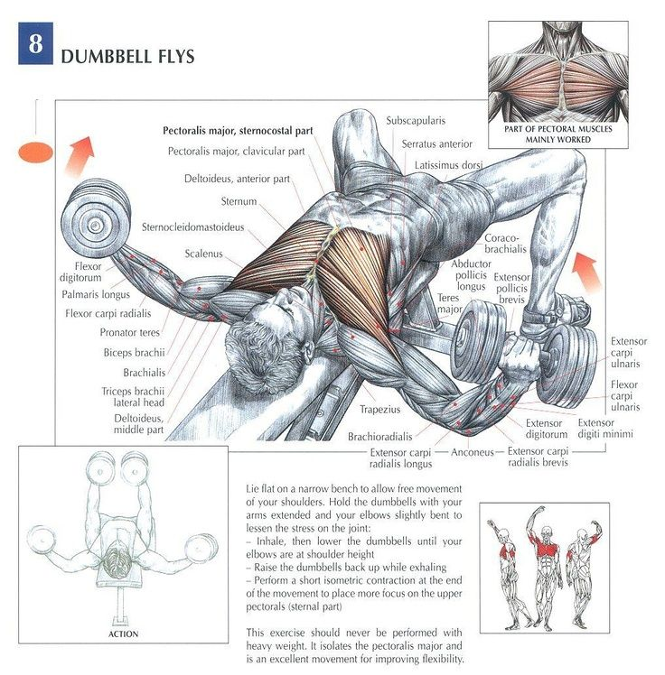 Dumbbell Flat Bench Fly - muscles hit