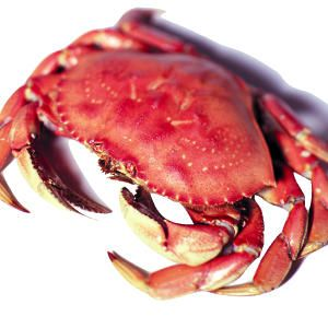 Cooking Dungeness Crab