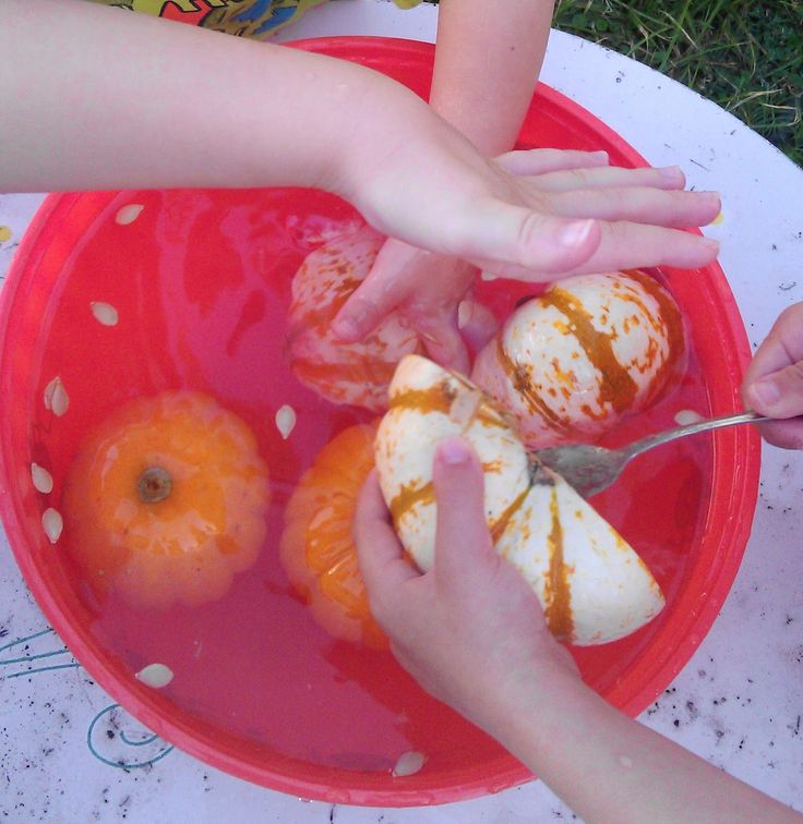 Pumpkins are the perfect lab subject for preschoolers and other young children: they are festive, come in a variety of shapes and colo...