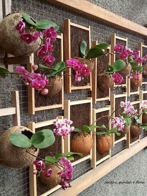 Painel com orquídeas plantadas em cascas de coco
