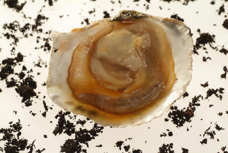 Ostra con destilado de tierra del chef Joan Roca del restaurante Celler de Can Roca (Girona). Fotógrafo: Toya Legido / ICEX