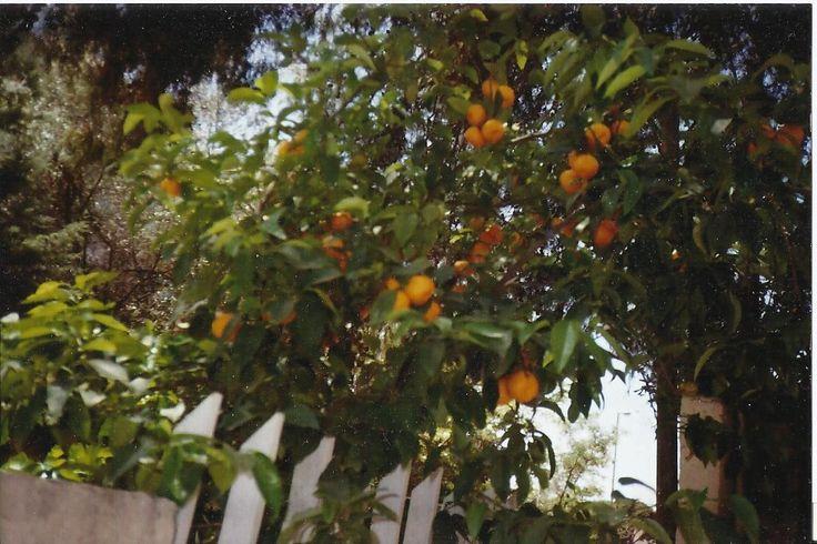 Κατηγορία: Κήποι - Αλέξανδρος