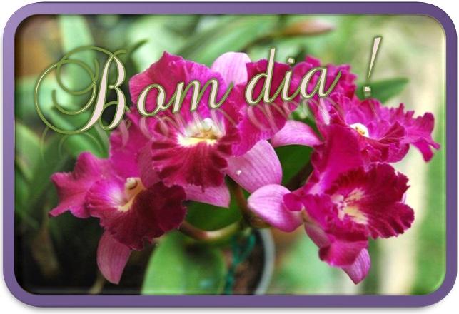 10 Best Images About Jardim- Bom Dia On Pinterest