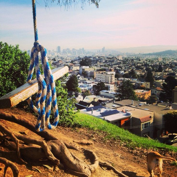 Hike up Billy Goat hill and you'll find a tree swing that ...