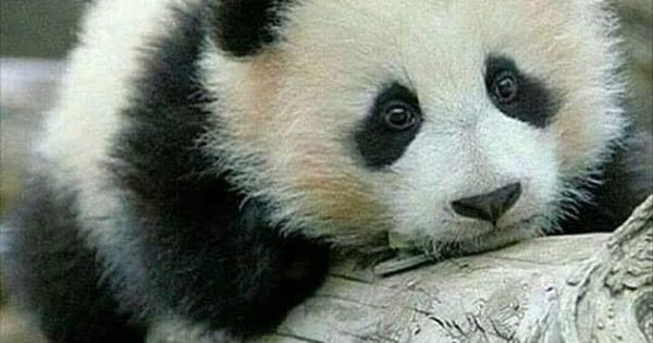 Funny Pictures Of The Day - 30 Pics | Animal Humor | Pinterest | Pizza and Pandas.   Lol😂