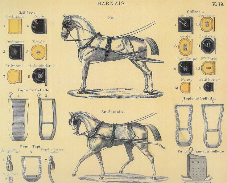 Harness a horse for 4 wheels (cont.)
