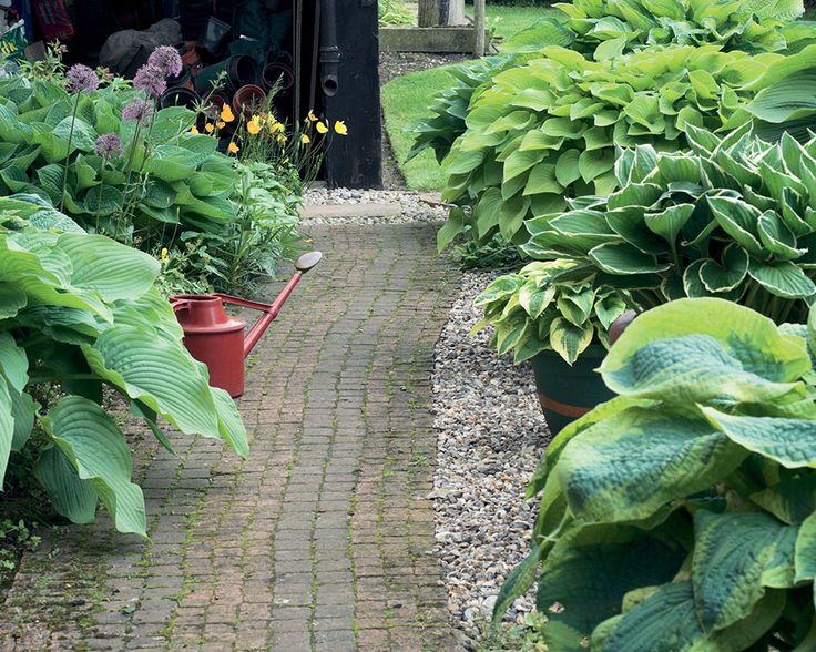 Delightful Plant An Assortment Of Hostas With Flower Bulbs To Decorate Walkways And  Create Inviting Borders.