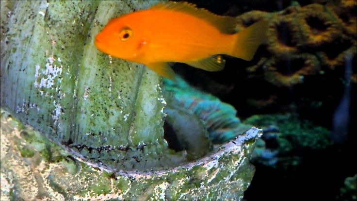 36 best images about fish animation on pinterest first for What is the fastest swimming fish