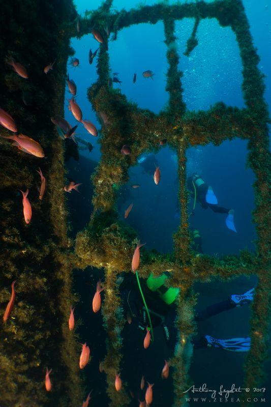 Plongée à Marseille : l'épave du Chaouen