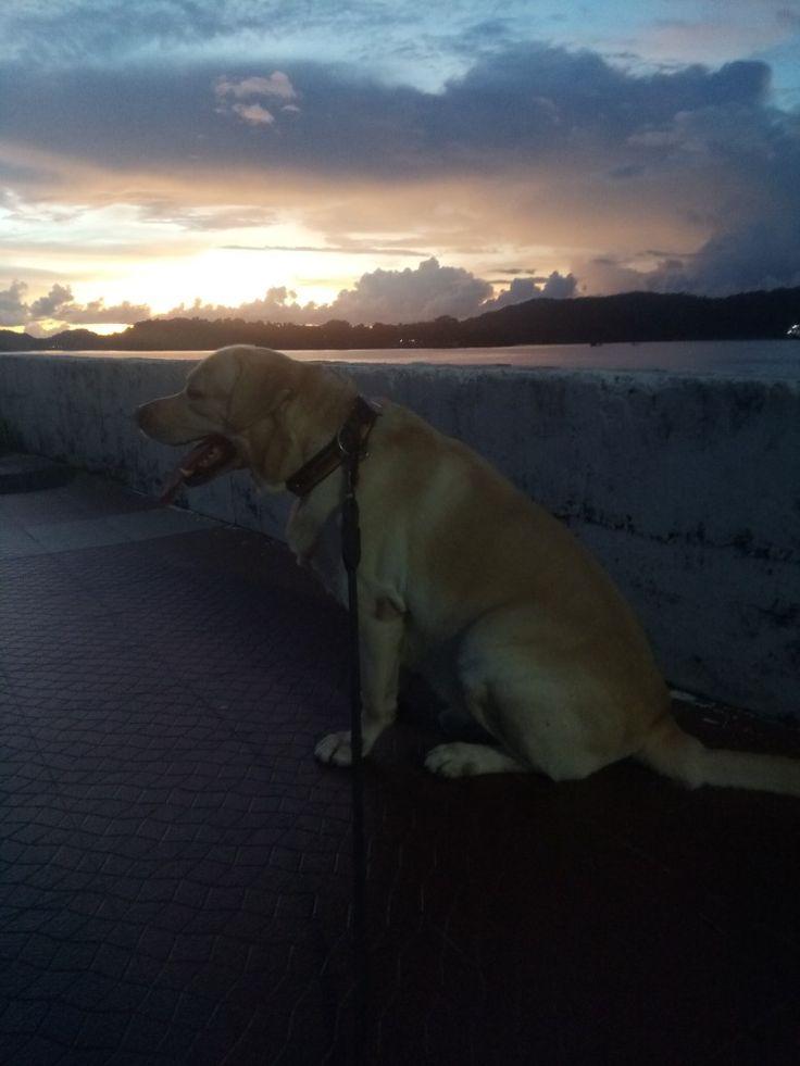 Love the evening walks