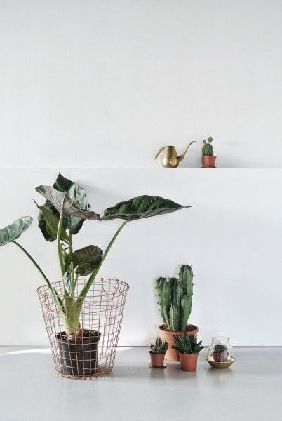 Cacti and Green plants in copper pots. | MADE.COM/Unboxed