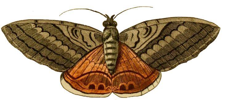 Pix For gt Moth Clip Art Moths Pinterest Art