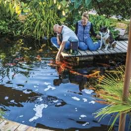 This couple converted an unused swimming pool into an oasis-like koi pond. #phgmag