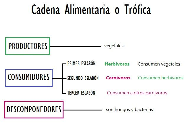 Alimentación De Los Seres Vivos Productores Consumidores Y