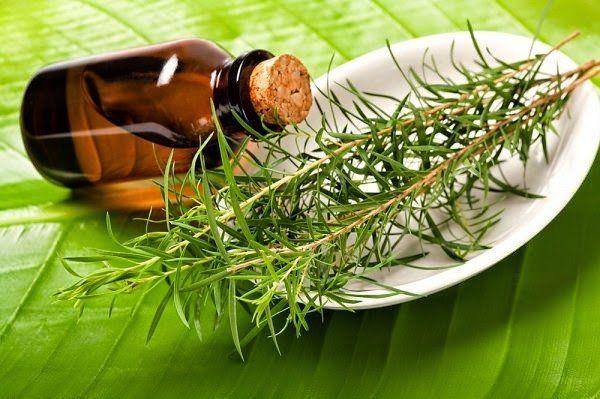 Sokoldalú csodaszer, ami immunerősítő, természetes gyulladáscsökkentő, baktérium-, gomba-, és vírusölő hatással bír.