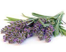 """""""Yrttimetsä"""" Brighter World Laventeli verbena Nauti Provencen pelloilta poimitun laventelin puhtaan metsäisestä tuoksusta."""