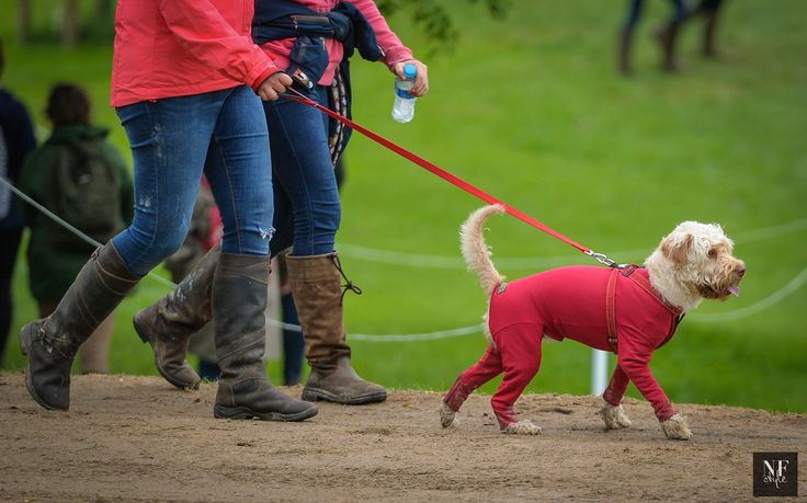 A Day in the Country at the Bramham International Horse Trials   NF Style  Doggy Long Johns! This little guy was sporting it at the 3-day event in the UK 2017. I just love this outfit. Where oh where to get one. #dogs #horses #eventing #riders #England #Bramham #style #pets