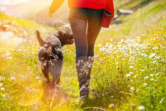 Pet Sitting: Τι λένε οι πεζοπορίες για τη σχέση σας με το σκυλί...
