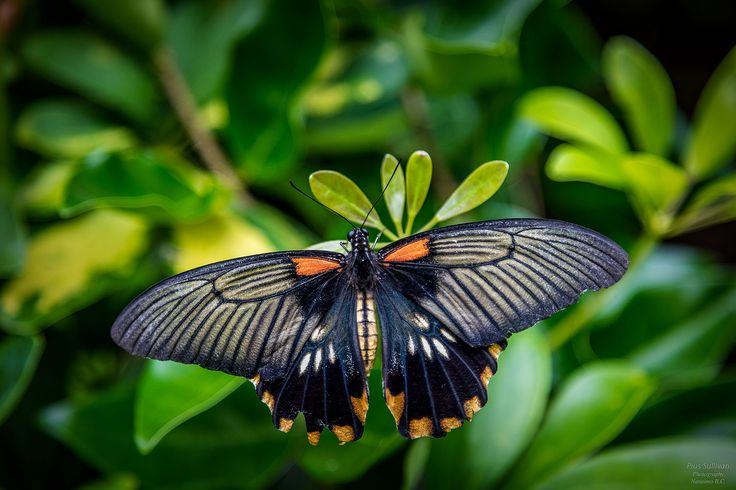 Butterfly by Pius Sullivan on 500px