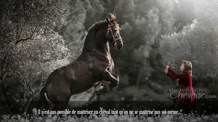 Il n'est pas possible de maîtriser un cheval tant qu'on ne se maîtrise pas soi-même.