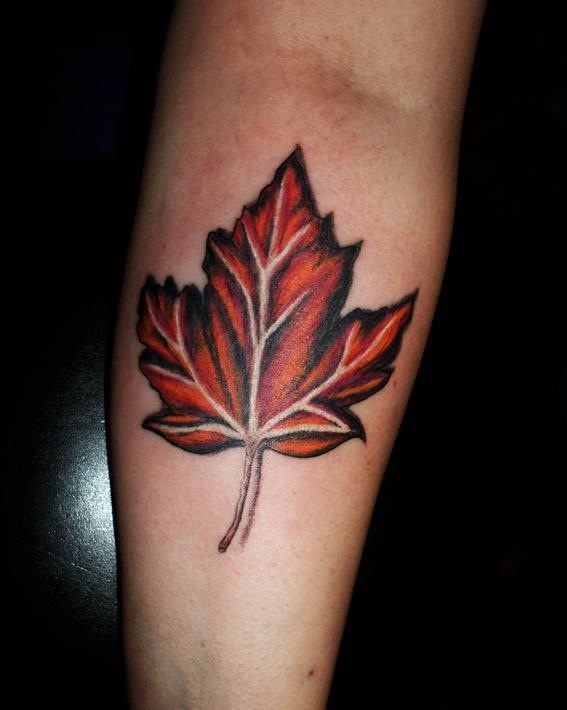 41 best trees images on pinterest tattoo ideas pine for Irish canadian tattoos