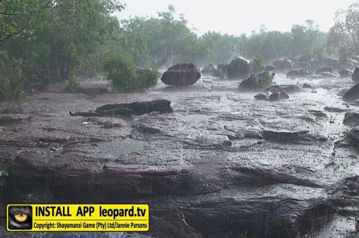 Beautiful photos taken at Leopard's Sleeping Place! #nature #africa #leoaprdtv
