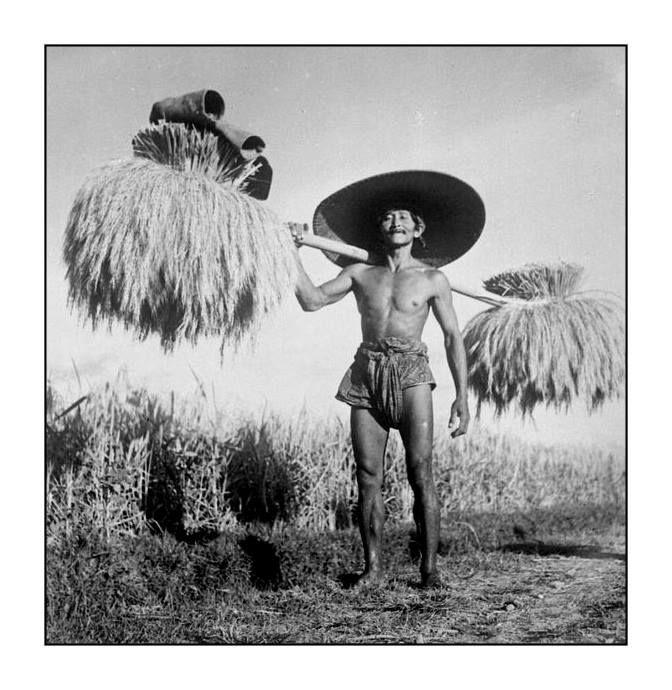 Balinese rice farmer, 1930