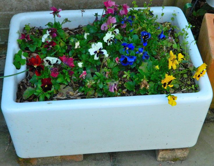 A reclaimed butler sink now on the patio and home to a variety of pansies and very happy they are too!