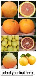 Riverina oranges and lemons direct tor your door