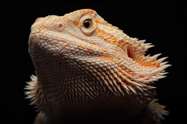 Igor Siwanowicz has spent the last five years carefully acquiring, breeding and capturing bizarre and visually stunning images of reptiles and amphibians