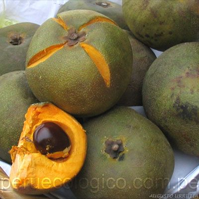 Lúcuma (Pouteria lucuma) is a subtropical fruit native to the Andean valleys of Peru.
