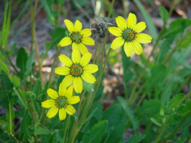 17 Best images about Pollinator Pathway Planter Project on ...