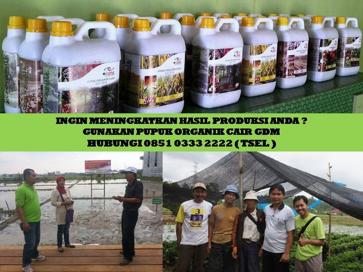 GDM, sebuah produk pupuk / nutrisi organic cair yang mengandung zat yang dibutuhkan oleh Tanaman dan Ternak •Unsur Hara Makro : Nitrogen ( N ) – Phospor ( P ) – Kalium ( K ) •Unsur Hara Mikro : Magnesium ( Mg ) -  Calcium ( Ca ) – Natrium ( Na ) – Zat Besi ( Fe ) – Tembaga ( Cu ) – Seng ( Zn ) – Mangan ( Mn ) dan sebagainya. •Bakteri : Bacillus Brevis – Bacillus Pumillus – Bacillus Mvcoides – Pseudomonas Alcaligenes – Pseudomonas Mallei – Klebsiella Oxytoca – Micrococcus Roseus   Karena…