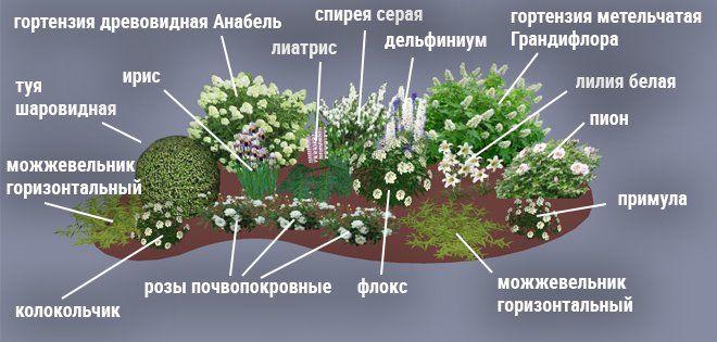 Цветник на загородном участке может быть оформлен по принципу контраста или нюанса. В первом случае на клумбе высаживают растения с яркой и разноцветной окраской листьев или лепестков. Во втором – используют однотонные цветы.