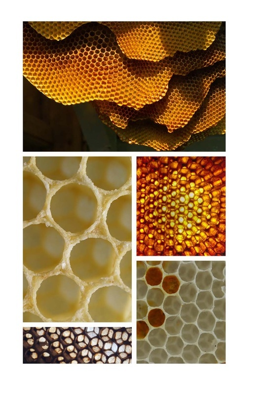 honeycomb by Jenndigodesigns