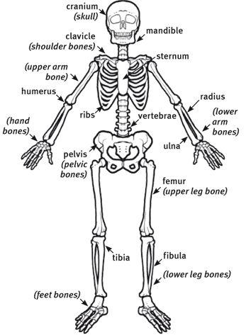 Pin by Terri Clark on home school | Lower leg bones ...
