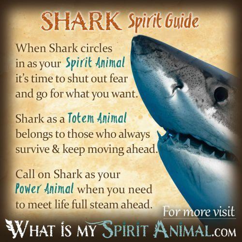 Fish Symbolism & Meaning | Spirit, Totem, & Power Animal