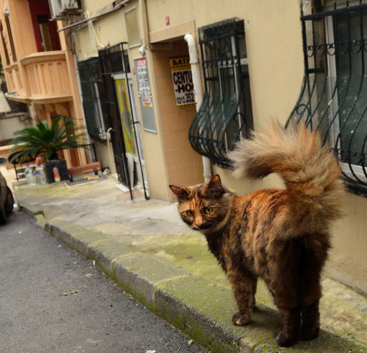 https://fromplacetospace.wordpress.com/2014/11/25/the-city-of-cats/ cat in istanbul