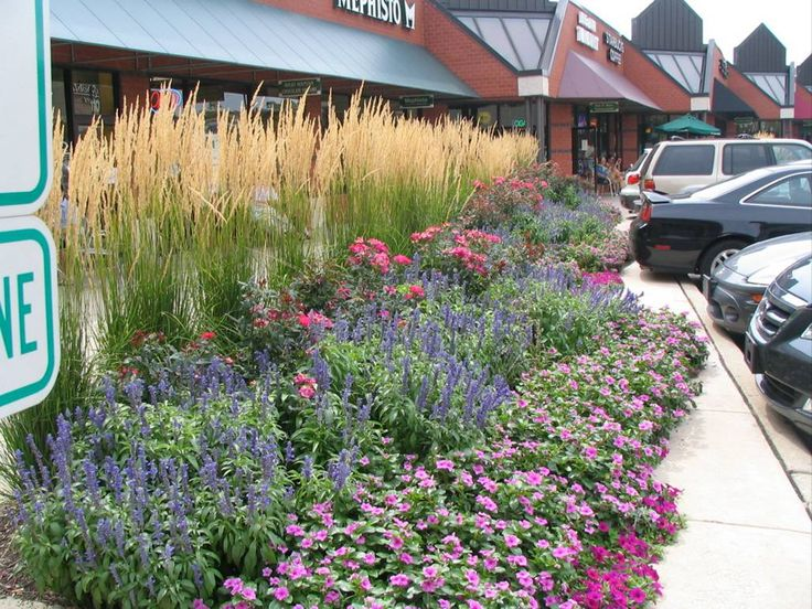 17 best ideas about drought resistant grass on pinterest for Perennial flower bed design